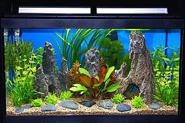 alles ber pflanzen tiere garten und natur aquascaping unterwasserg rtnern. Black Bedroom Furniture Sets. Home Design Ideas